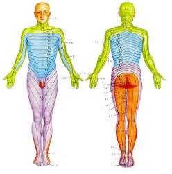 Dermatome map face quotes