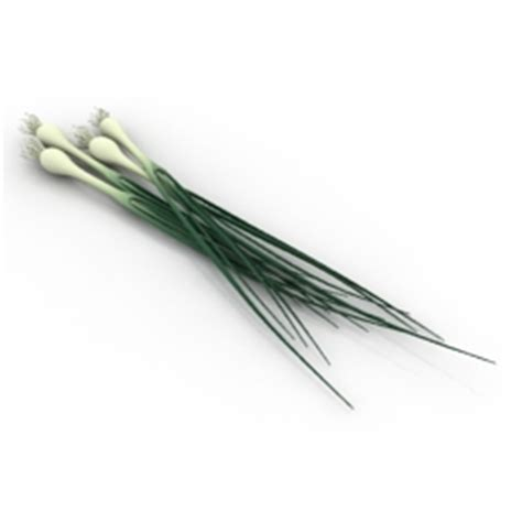 onion link rar 3d model spring onions category quot 3d models collection