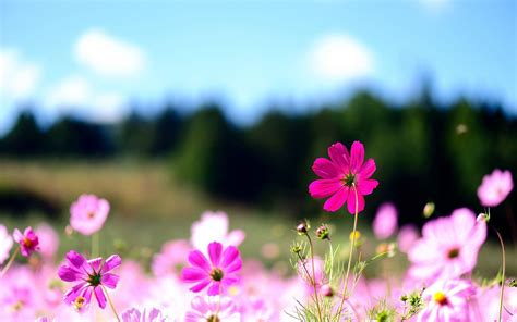 flower wallpaper 1366x768 pictures of flowers for desktop backgrounds wallpaper cave
