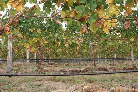 progettare impianto irrigazione giardino impianto di irrigazione fai da te impianto irrigazione
