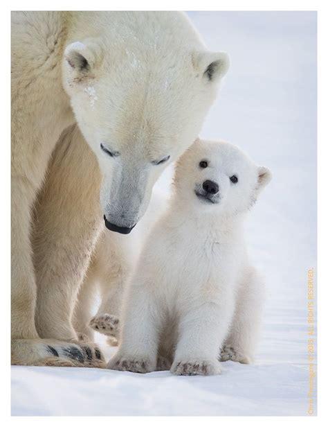 love  mom  chris prestegard animals