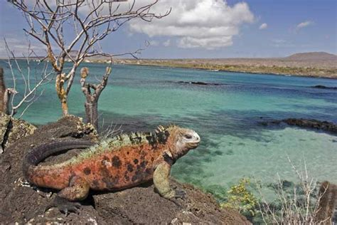 6 Amazing Animals From The Galapagos Islands by High Five Ecuador Experiences Sta Travel