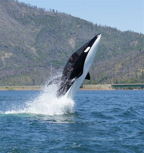 the shark names the submarine whale watching boat seabreacher photos so freaking cool