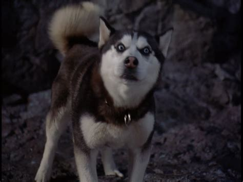 from snow dogs from snow dogs siberian huskies photo 32171012 fanpop