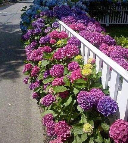 imagenes de jardines con hortensias beneficios de los cercos vivos decoraci 243 n de interiores