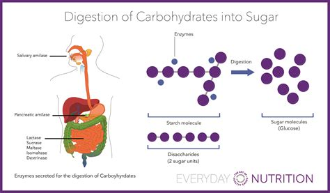 carbohydrates to glucose everyday nutrition the thing you should do for