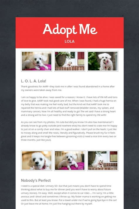 78 Images About Flyer Ideas On Pinterest Looking For Someone Shelters And Pets Adopt Me Flyer Template
