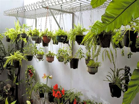 tips merawat taman  tetap indah ragam tanaman