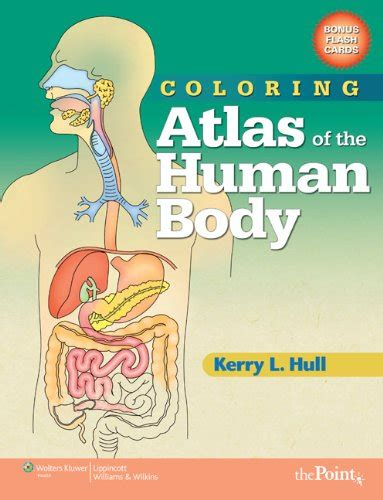 atlas of human anatomy coloring book 404 squidoo page not found