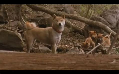 a tale of mari and three puppies screenshot gallery 1 reel dogs