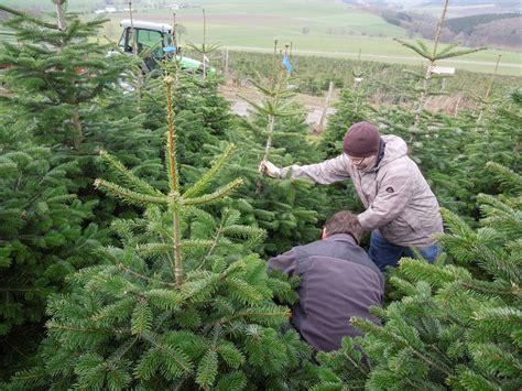 best 28 weihnachtsbaum selber schlagen ruhrgebiet