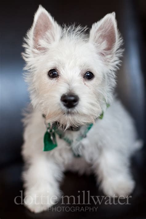 pictures of haircuts for westies 25 best ideas about first haircut on pinterest boys