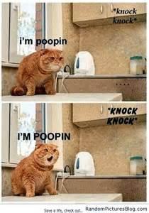 Cat Bathroom Door Meme I M Poopin Random Pictures