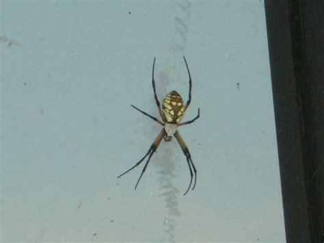 st andrews cross spider hot girls wallpaper