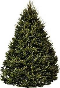 8 ft balsam fir christmas tree hilltop christmas tree