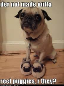 Pics photos pictures dog pug in pug slippers jpg