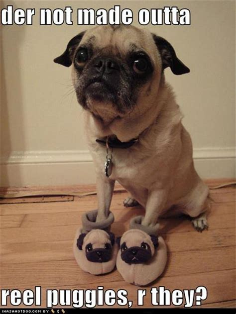 pug slippers for dogs pug dogs slippers dump a day