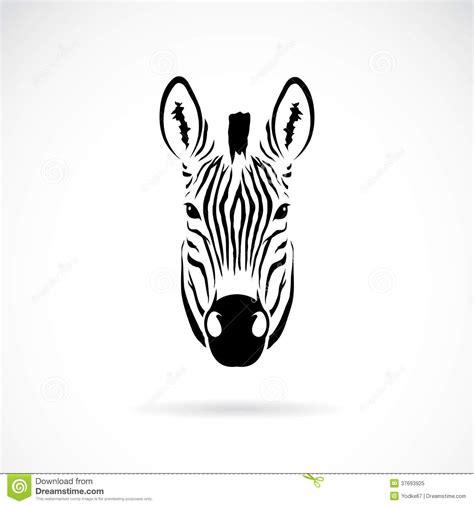 vector image of an zebra head royalty free stock photo