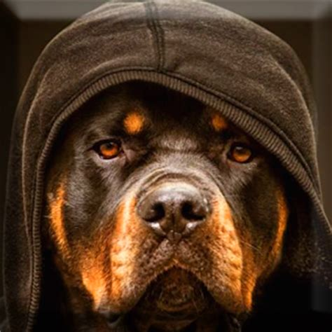 Rottweiler Wallpaper Android Apps On Play