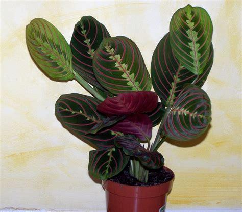 fiori appartamento le piante da appartamento i fiori di grazia