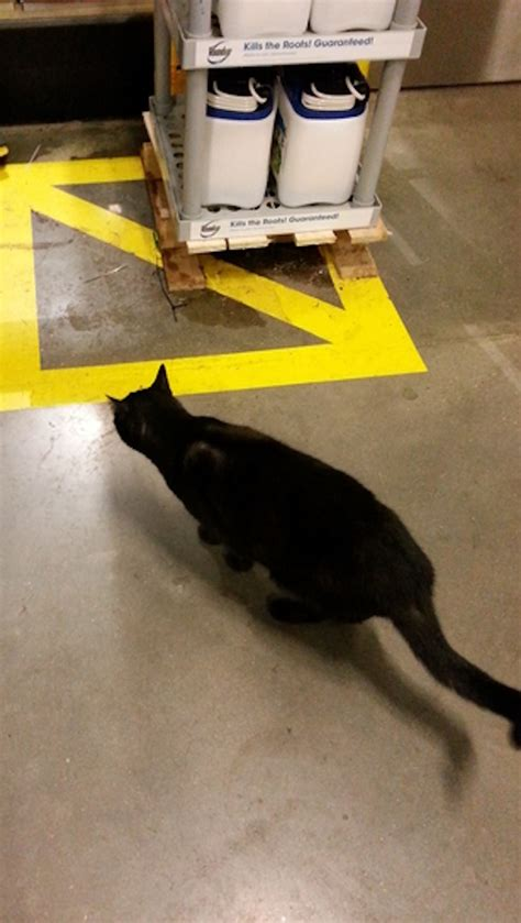 help save a black cat who faces eviction from a home depot