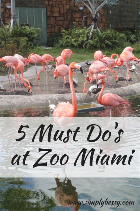 5 Must Dos by 5 Must Do S At Zoo Miami Simply Bessy