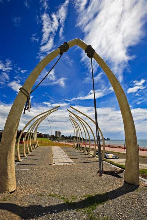 whale bone exhibit taranaki  zealand photo information