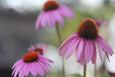 introduction  native plants  sc landscapes home