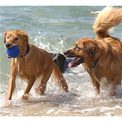 florida beaches that allow dogs best friendly beaches coastal living