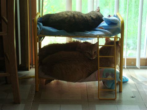 Bunk Beds For Cats My Built My S Cats Bunk Beds And They Actually Use Them Aww