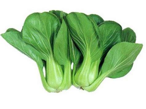 Pak Choi Putih 200benih mursyidah khasiat dan kelebihan sayur sawi