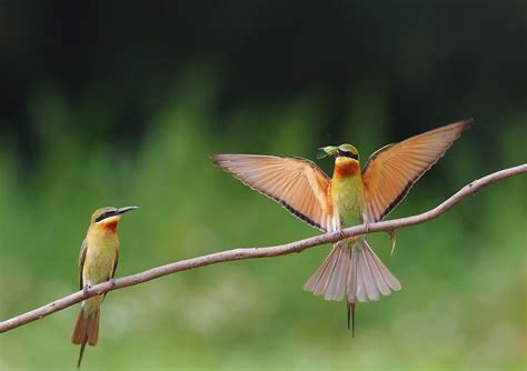 bee eater wallpapers first hd wallpapers bee eater full hd wallpaper and background 2046x1445