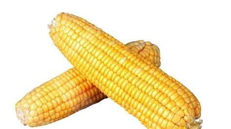 Pakan Ternak Impor Jagung impor jagung