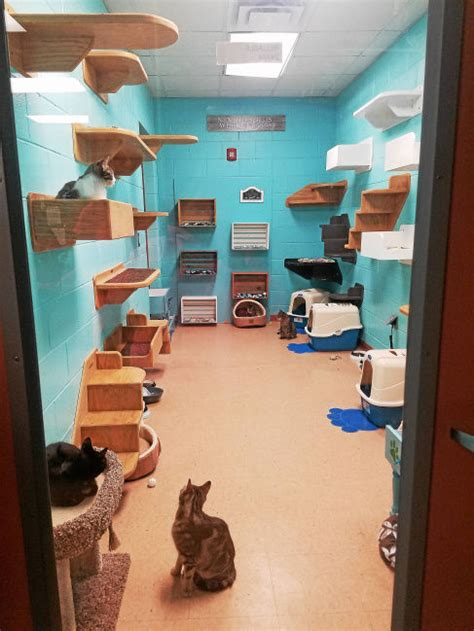 cat room cats at brownstown shelter now their own unique