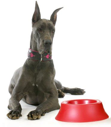 best food for great dane puppies best food for great danes 6 vet recommended brands