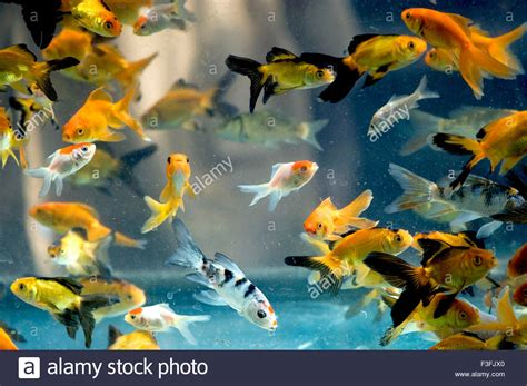 types of aquarium fish types of fish that live in tanks pictures to pin on pinterest pinsdaddy