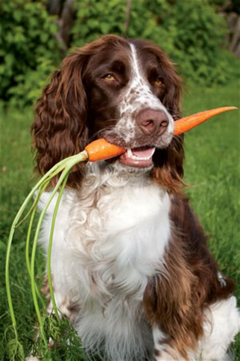 what vegetables are for dogs vegetables for dogs to feed or not to feed the possible canine