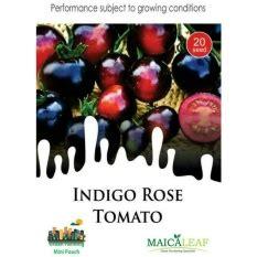 Bibit Tomat Indigo benih tomat indigo jualbenihmurah
