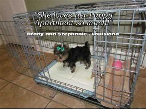 apartment potty puppy apartment reviews