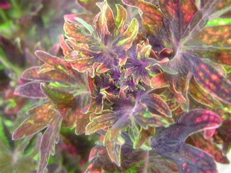 awesome looking flowers one of the cool looking flowers photo