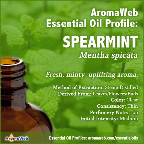 A Brief Profile Of A Few Essential Oils by Spearmint Essential Uses And Benefits Aromaweb
