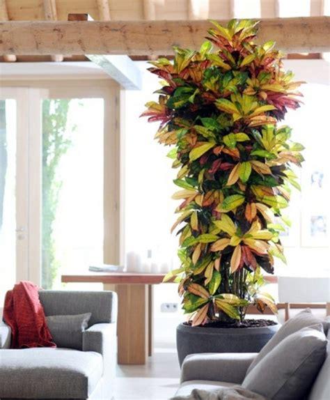 indoor house tree best 25 large indoor plants ideas on pinterest plants