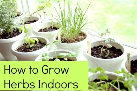 how to grow herbs indoors how to grow herbs indoors 5 tips