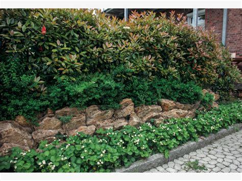 Garten Gestalten Hecken by Garten Mit Hecken Gestalten Mein Sch 246 Ner Garten