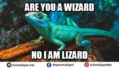 Reptile Memes - reptile memes images reverse search