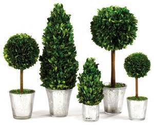 5 piece preserved boxwood topiary set transitional
