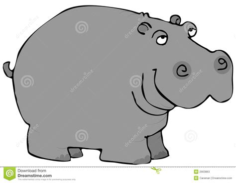 Gray Hippo Stock Illustration Image Of Snout Mammal