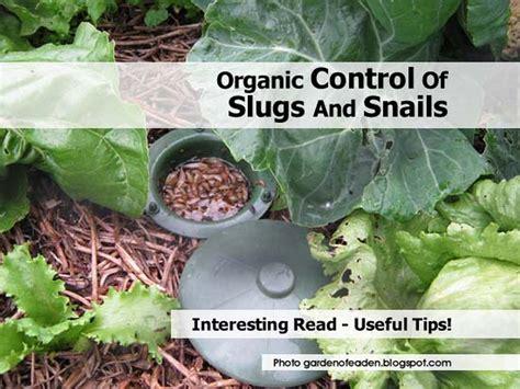 organic of slugs and snails