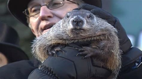 groundhog day just put that anywhere groundhog day punxsutawney phil says is just