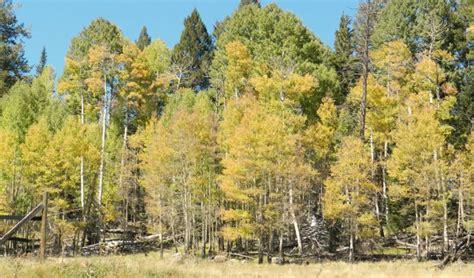 fall colors in arizona fall colors greer lodge arizona